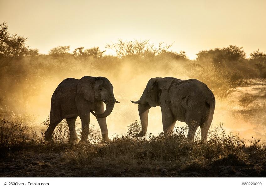 Content Marketing braucht keine Elefanten! Content Marketing braucht Standards!